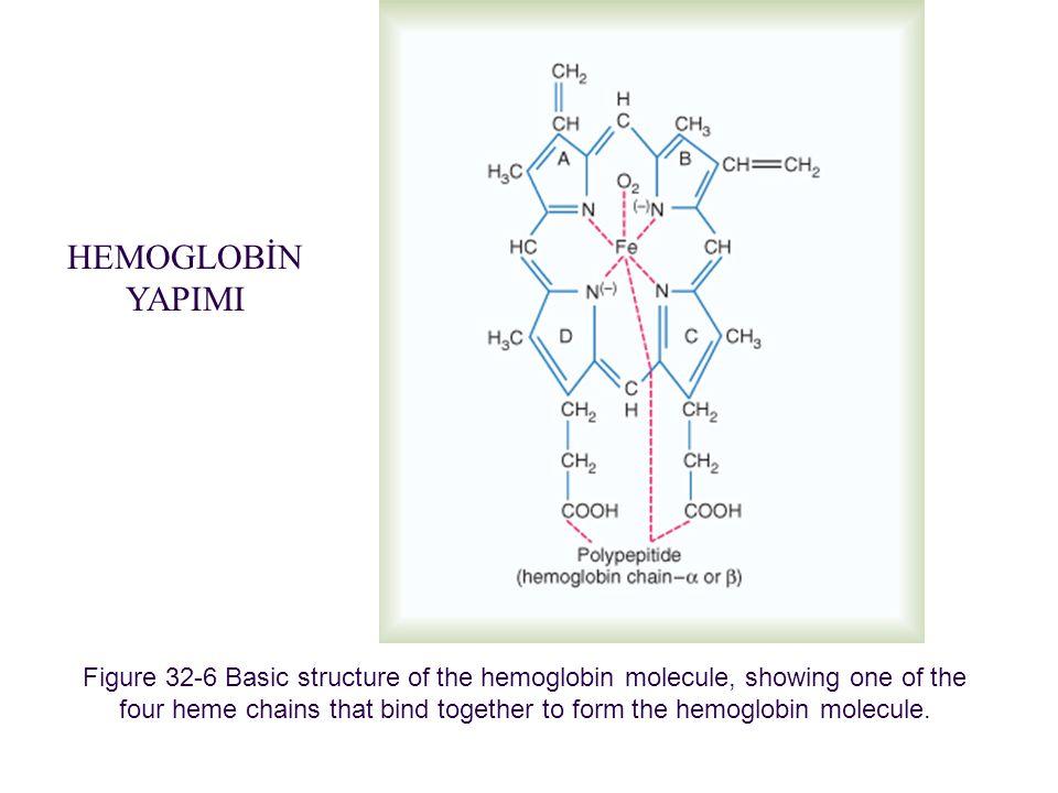 Kan fizyolojisi (2)12 Hemoglobin oksijenle bağlanarak oksihemoglobini oluşturur.