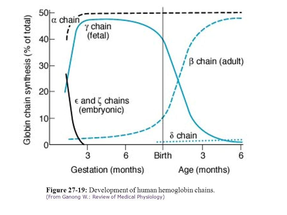 Figure 27-19: Development of human hemoglobin chains. (From Ganong W.: Review of Medical Physiology)