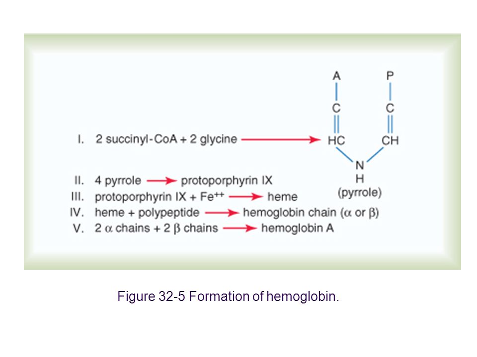 Figure 7-12: Transition from the T structure to the R structure becomes more probable as each heme group of a hemoglobin tetramer is oxygenated.