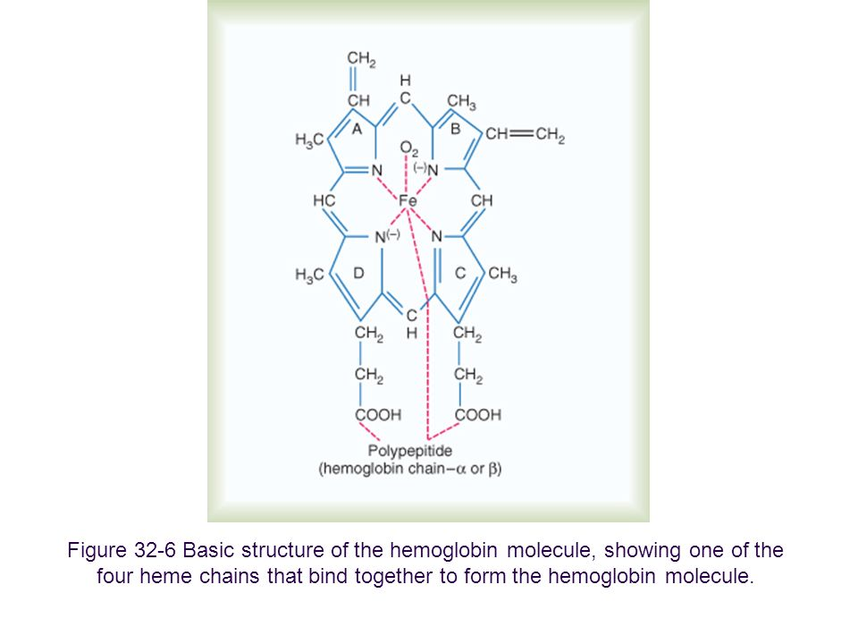 Figure 32-6 Basic structure of the hemoglobin molecule, showing one of the four heme chains that bind together to form the hemoglobin molecule.