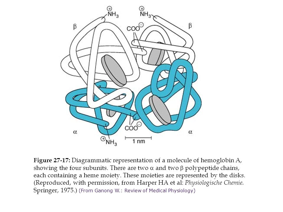 Figure 27-17: Diagrammatic representation of a molecule of hemoglobin A, showing the four subunits.