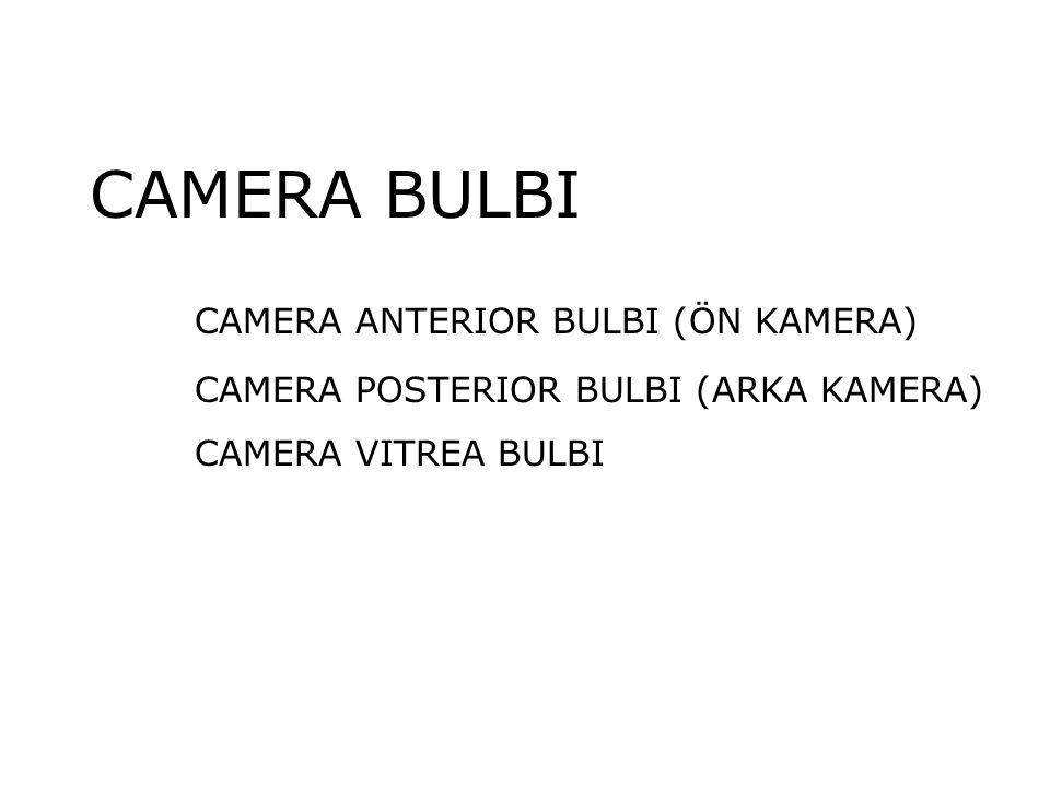 CAMERA BULBI CAMERA ANTERIOR BULBI (ÖN KAMERA) CAMERA POSTERIOR BULBI (ARKA KAMERA) CAMERA VITREA BULBI