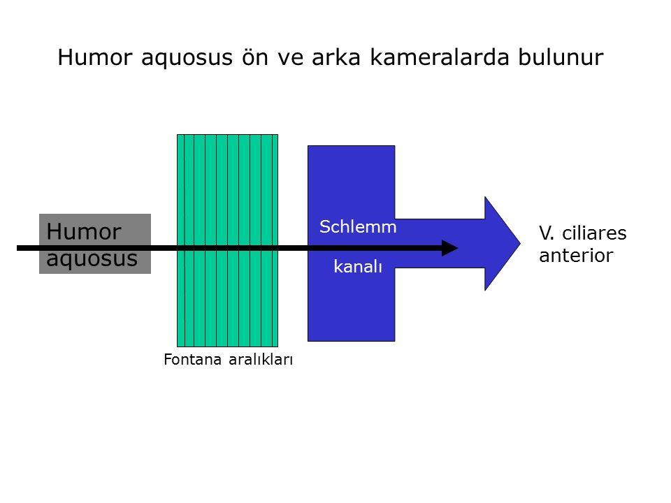 Humor aquosus ön ve arka kameralarda bulunur Humor aquosus Fontana aralıkları Schlemm kanalı V. ciliares anterior