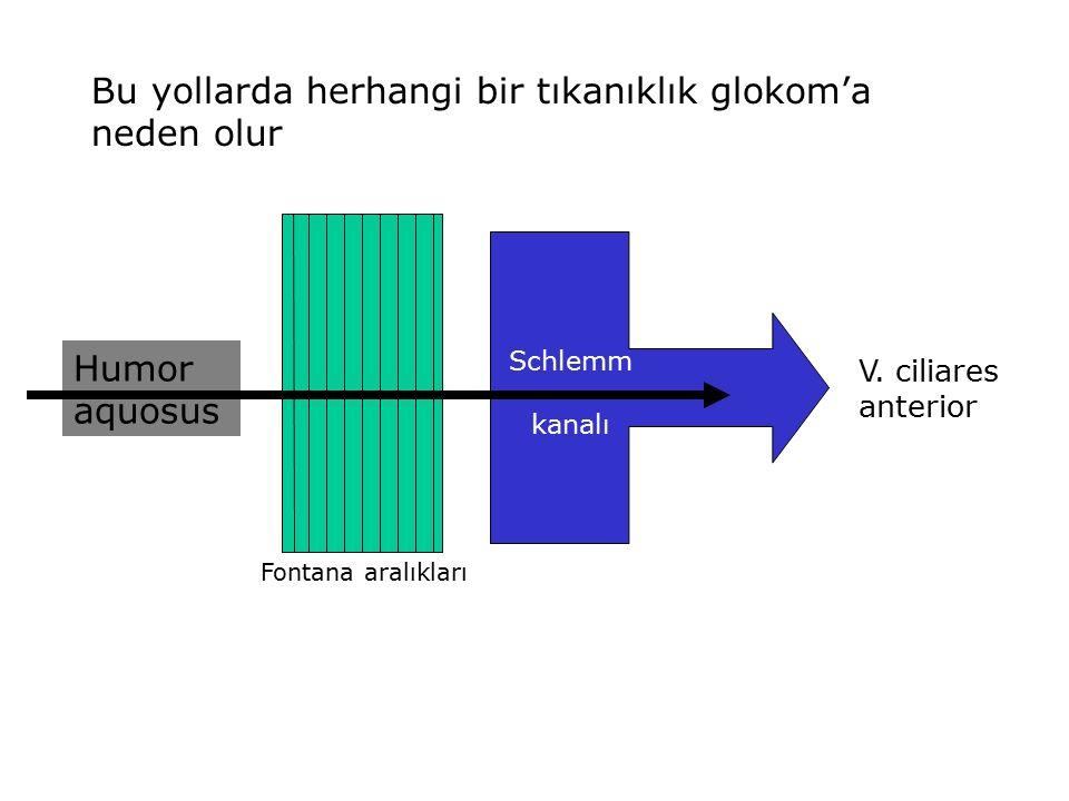 Bu yollarda herhangi bir tıkanıklık glokom'a neden olur Humor aquosus Fontana aralıkları Schlemm kanalı V. ciliares anterior