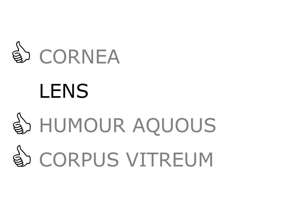 CORNEA LENS HUMOUR AQUOUS CORPUS VITREUM   
