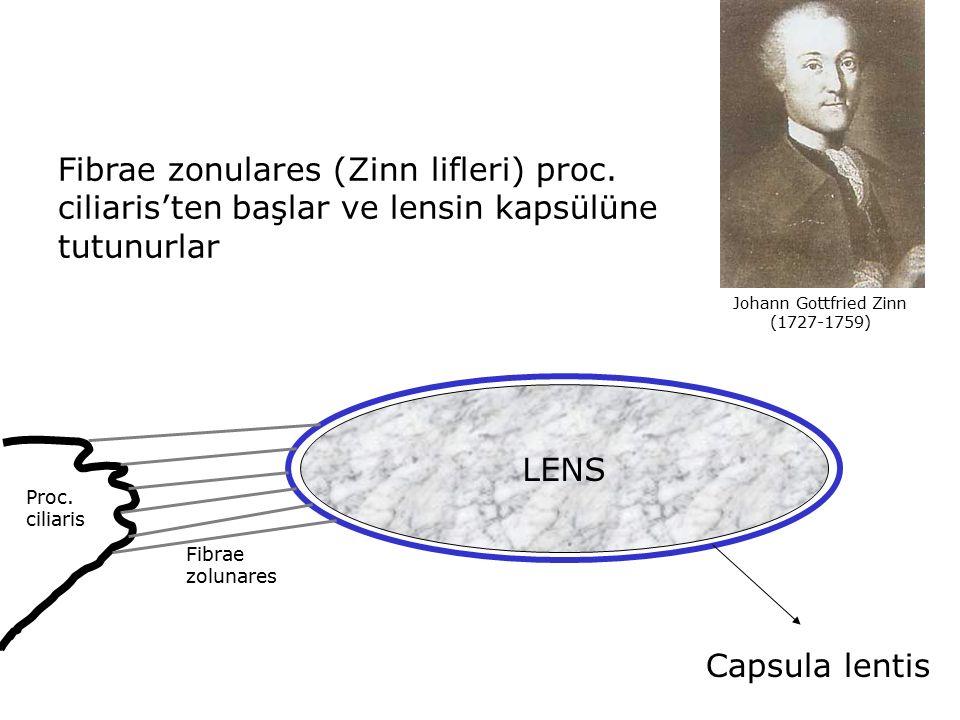 Fibrae zonulares (Zinn lifleri) proc. ciliaris'ten başlar ve lensin kapsülüne tutunurlar LENS Capsula lentis Proc. ciliaris Fibrae zolunares Johann Go