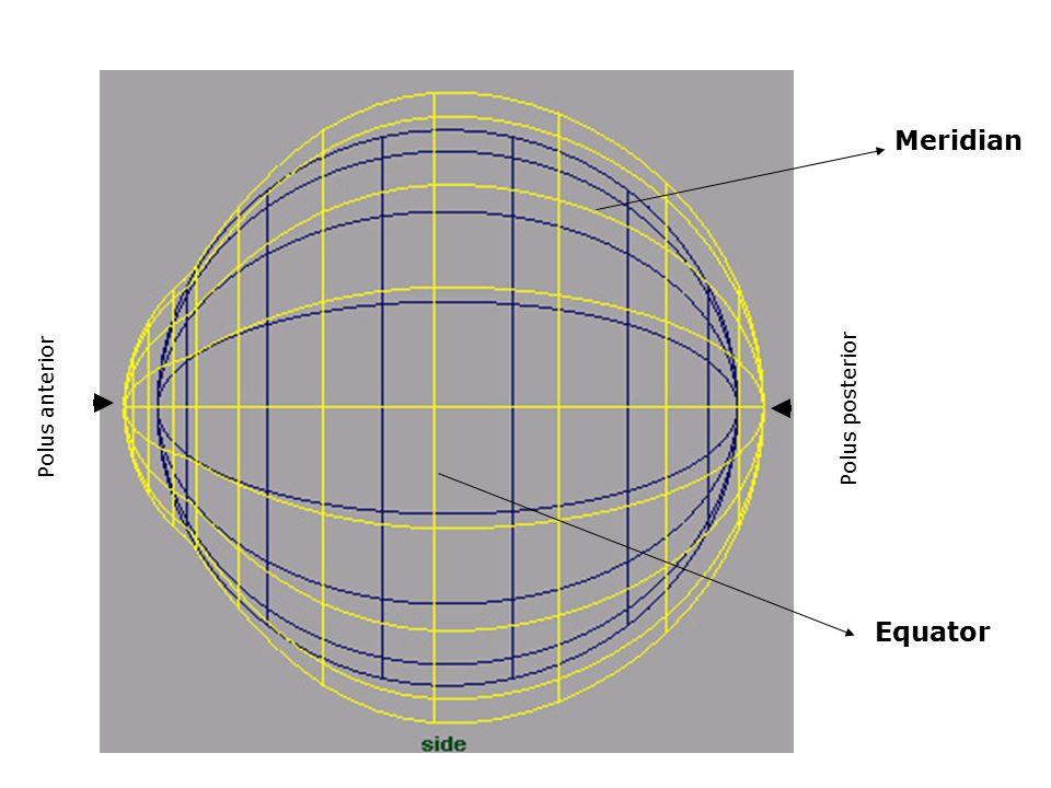 Polus anterior Polus posterior Meridian Equator