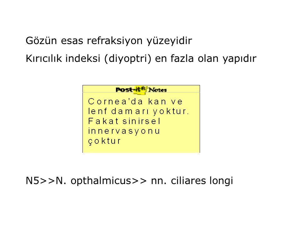 Gözün esas refraksiyon yüzeyidir Kırıcılık indeksi (diyoptri) en fazla olan yapıdır N5>>N. opthalmicus>> nn. ciliares longi