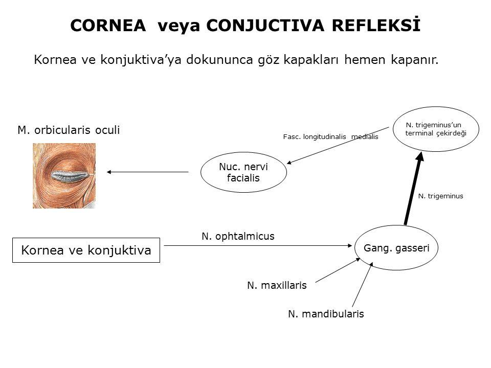 CORNEA veya CONJUCTIVA REFLEKSİ Kornea ve konjuktiva'ya dokununca göz kapakları hemen kapanır. Kornea ve konjuktiva N. ophtalmicus Nuc. nervi facialis