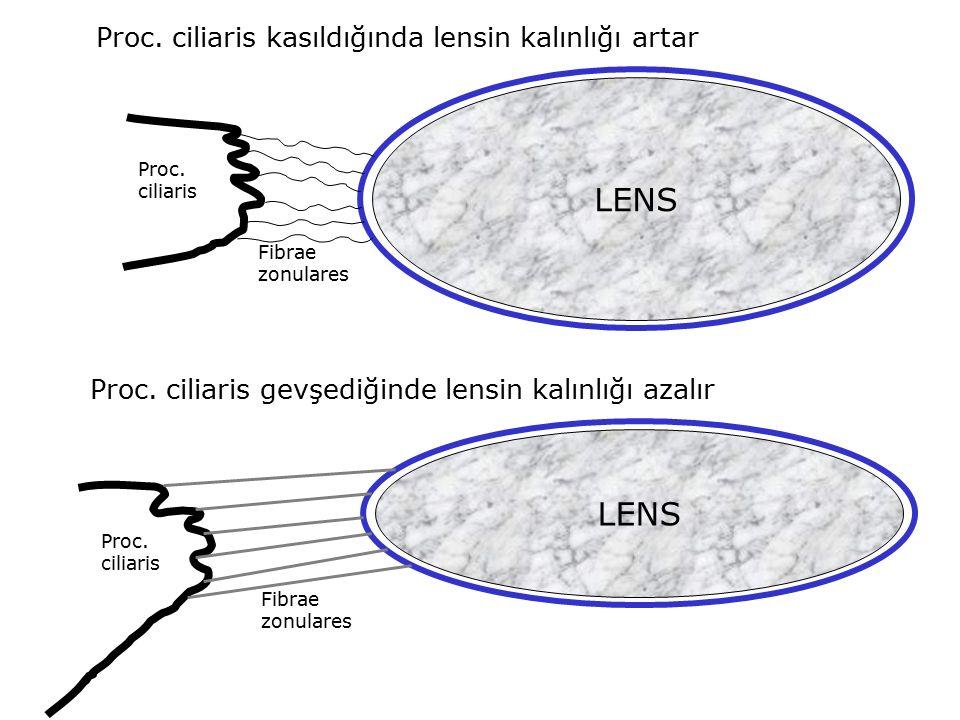 LENS Proc. ciliaris Fibrae zonulares LENS Proc. ciliaris Fibrae zonulares Proc. ciliaris kasıldığında lensin kalınlığı artar Proc. ciliaris gevşediğin