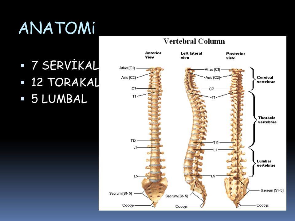 CT– CERVICAL SPINE C- 3 SECTION AXIALSAGITTAL PEDIKUL PEDIKÜL LAMINA