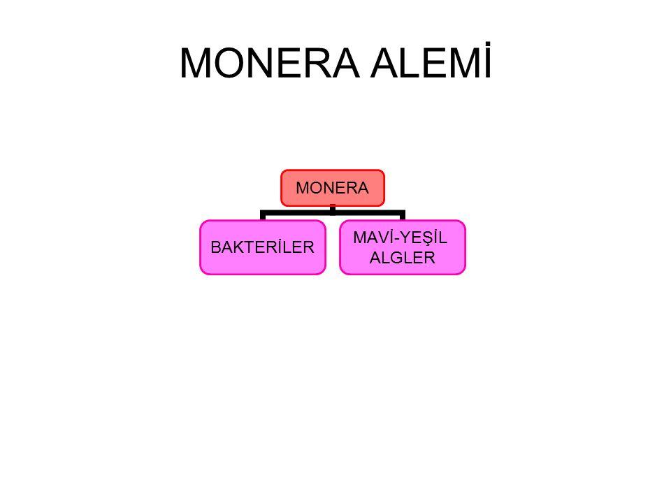 MONERA ALEMİ Monera aleminde incelenen tüm canlılar zar ile çevrili gerçek organelleri bulunmayan prokaryotik hücre yapısına sahiptirler.