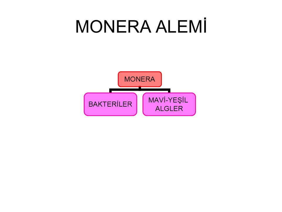 MONERA ALEMİ MONERA BAKTERİLER MAVİ-YEŞİL ALGLER