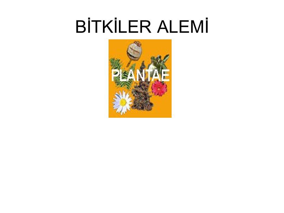 REGNUM (ALEM): PLANTAE (BİTKİLER) Birincil olarak karada yaşamaya uyum sağlamış, hücrelerinde kloroplast bulunan, fotosentez yapabilen, ototrof (kendibeslek) canlılardır.