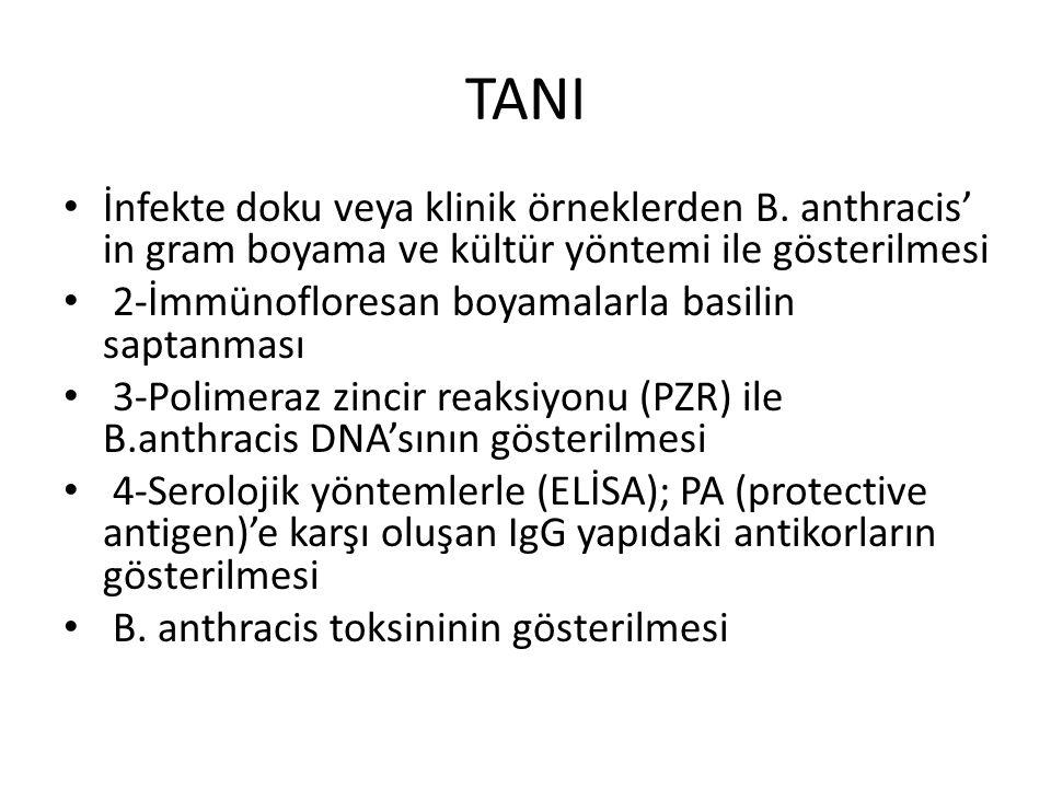 TANI İnfekte doku veya klinik örneklerden B.