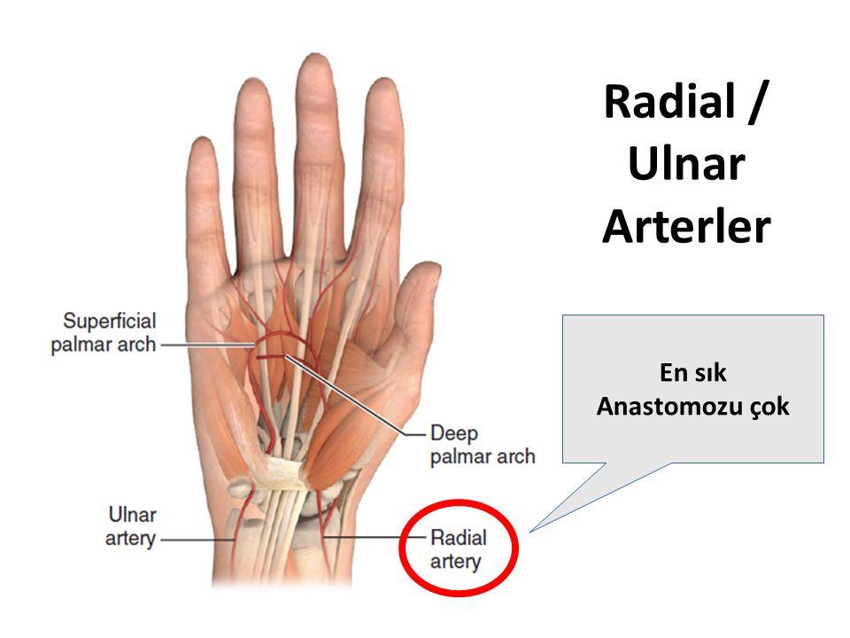 Radial / Ulnar Arterler En sık Anastomozu çok