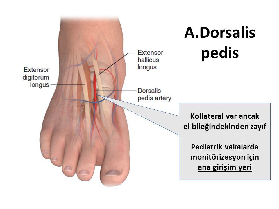 A.Dorsalis pedis Kollateral var ancak el bileğindekinden zayıf Pediatrik vakalarda monitörizasyon için ana girişim yeri