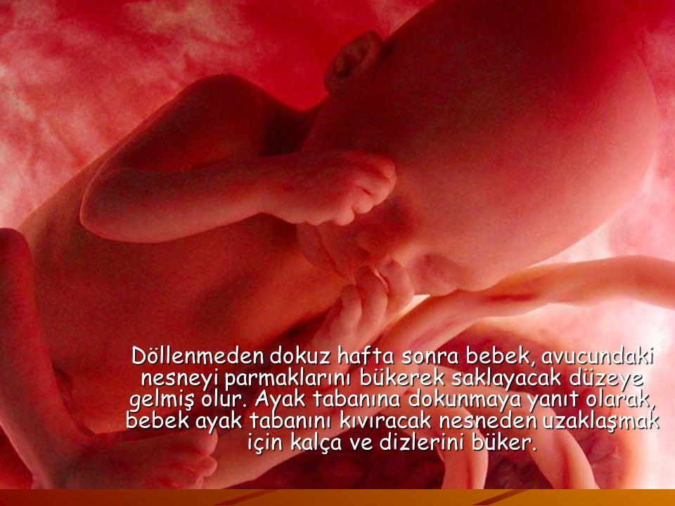 Dokunma algılayıcıları, fetus henüz 7 haftalıkken ilk olarak ağız çevresinde ortaya çıkar. Buradan tüm yüze, kollara, bacaklara ve nihayet vücuda yayı