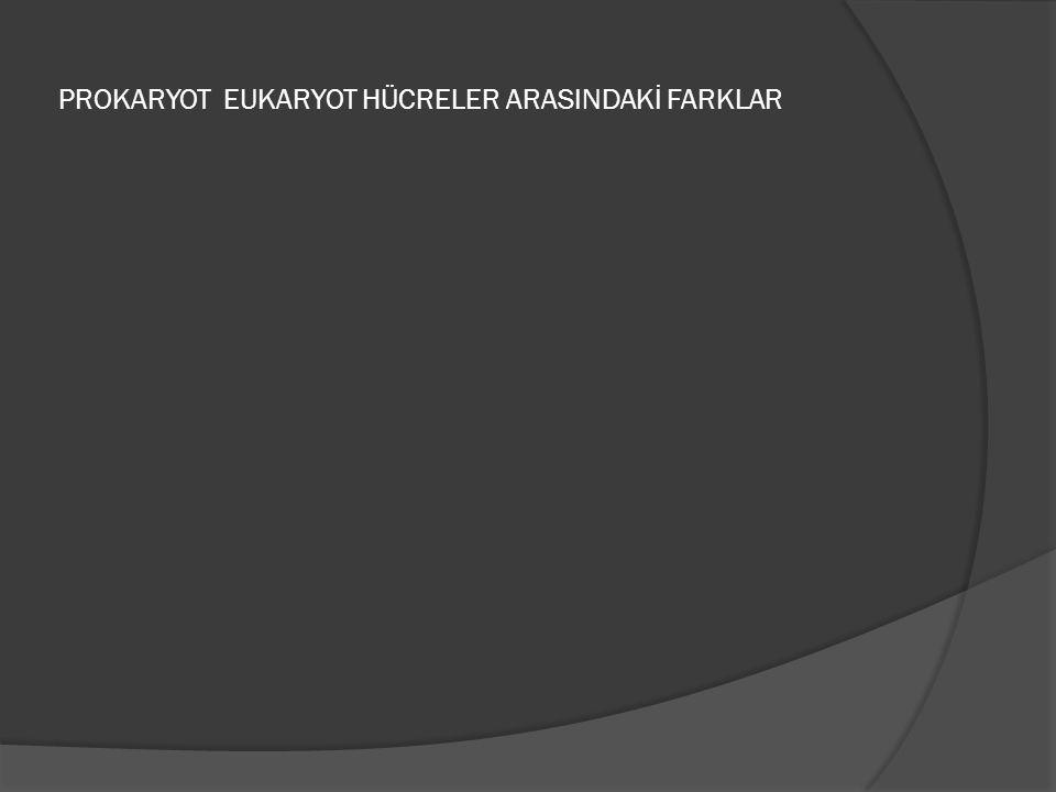PROKARYOT EUKARYOT HÜCRELER ARASINDAKİ FARKLAR