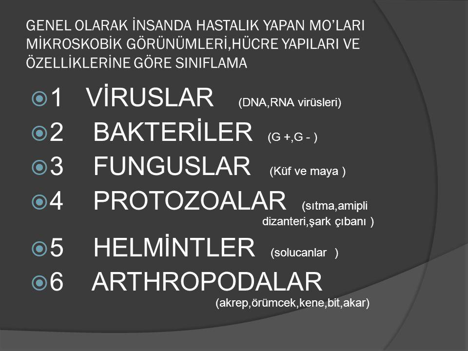 3-SPİROKETLER (sarmal şekilli bakteriler) 1 veya 10-15 kıvrımlı olabilir Gevşek kıvrımlar şeklinde görülenler Borelia Sıkıştırılmış yay gibi görülenler Treponema İnce kıvrımlar şeklinde görülenler leptospira