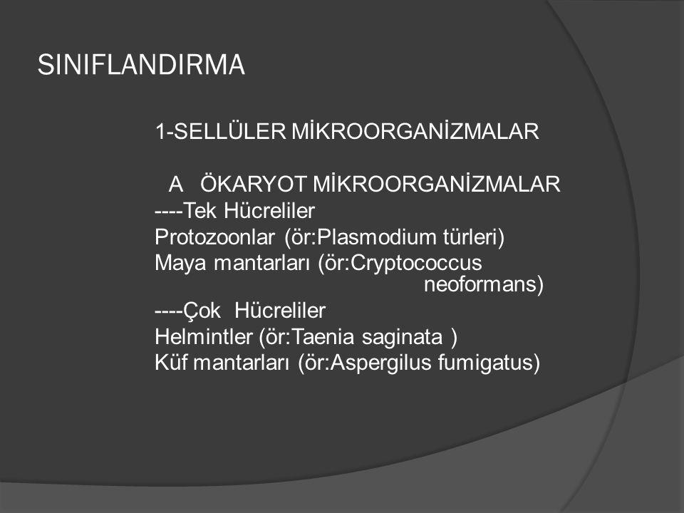 SINIFLANDIRMA 1-SELLÜLER MİKROORGANİZMALAR A ÖKARYOT MİKROORGANİZMALAR ----Tek Hücreliler Protozoonlar (ör:Plasmodium türleri) Maya mantarları (ör:Cryptococcus neoformans) ----Çok Hücreliler Helmintler (ör:Taenia saginata ) Küf mantarları (ör:Aspergilus fumigatus)