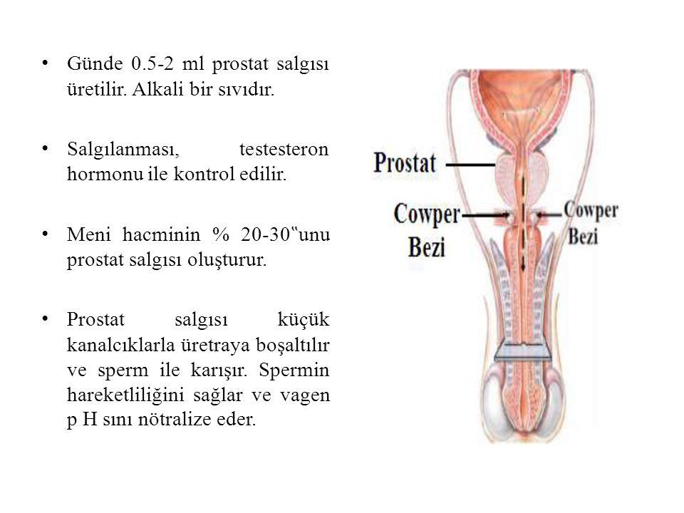 """Günde 0.5-2 ml prostat salgısı üretilir. Alkali bir sıvıdır. Salgılanması, testesteron hormonu ile kontrol edilir. Meni hacminin % 20-30 """" unu prostat"""