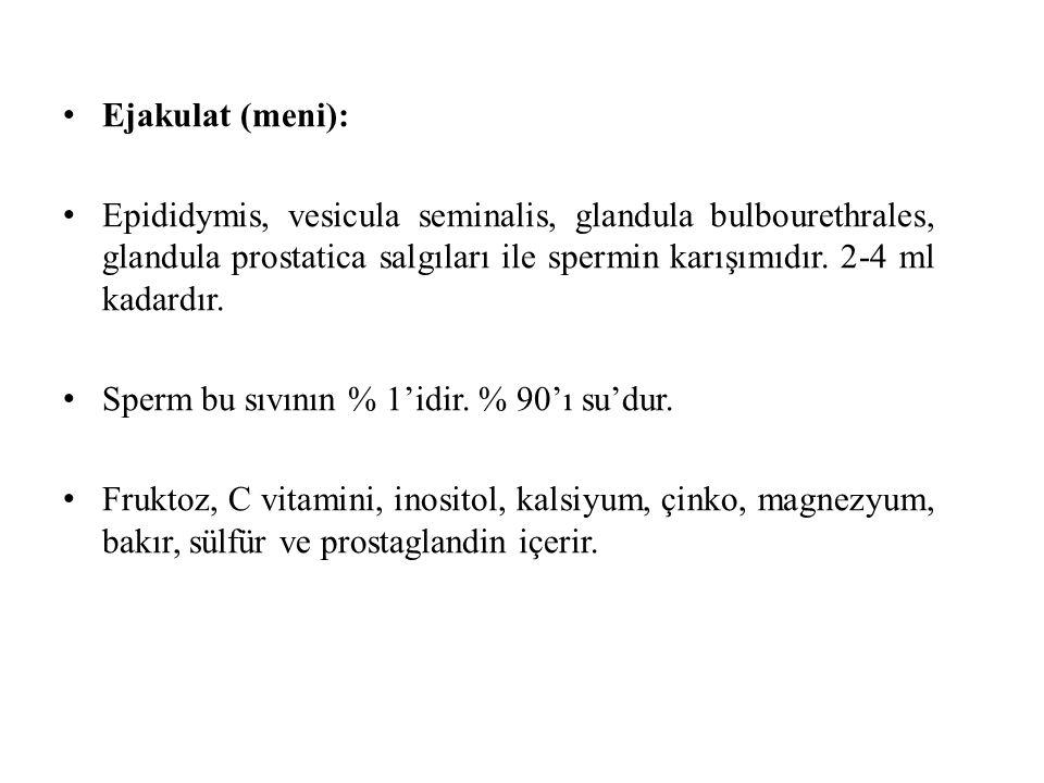 Ejakulat (meni): Epididymis, vesicula seminalis, glandula bulbourethrales, glandula prostatica salgıları ile spermin karışımıdır. 2-4 ml kadardır. Spe