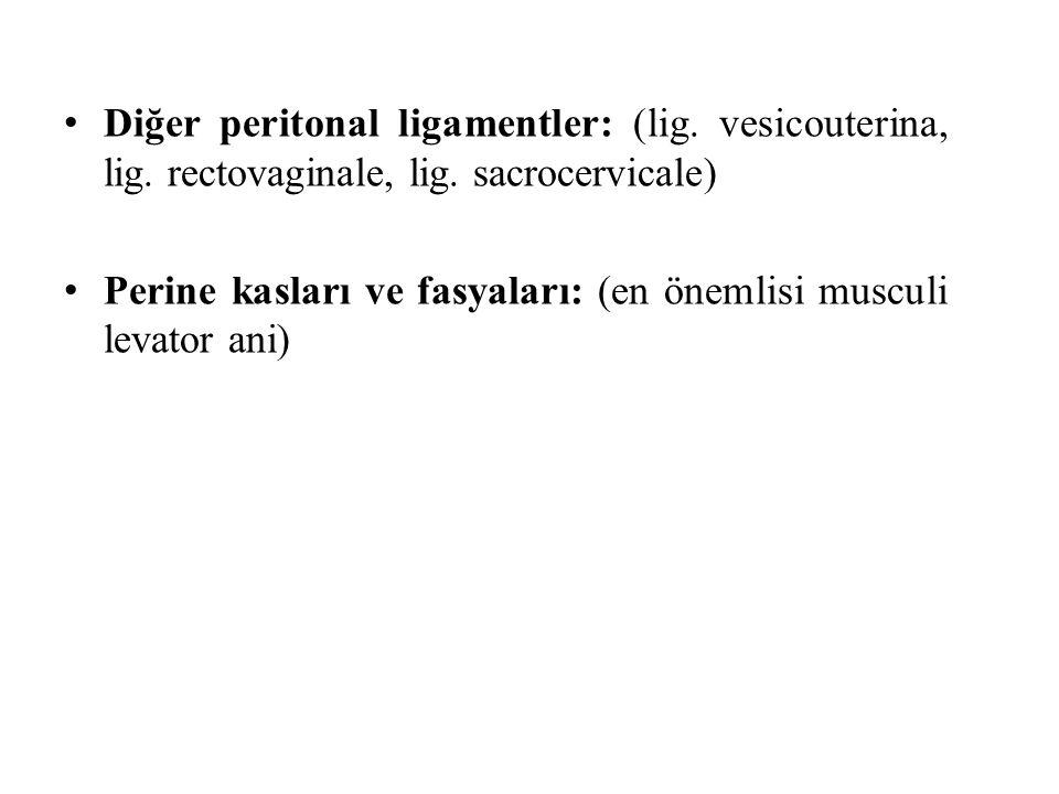 Diğer peritonal ligamentler: (lig. vesicouterina, lig. rectovaginale, lig. sacrocervicale) Perine kasları ve fasyaları: (en önemlisi musculi levator a