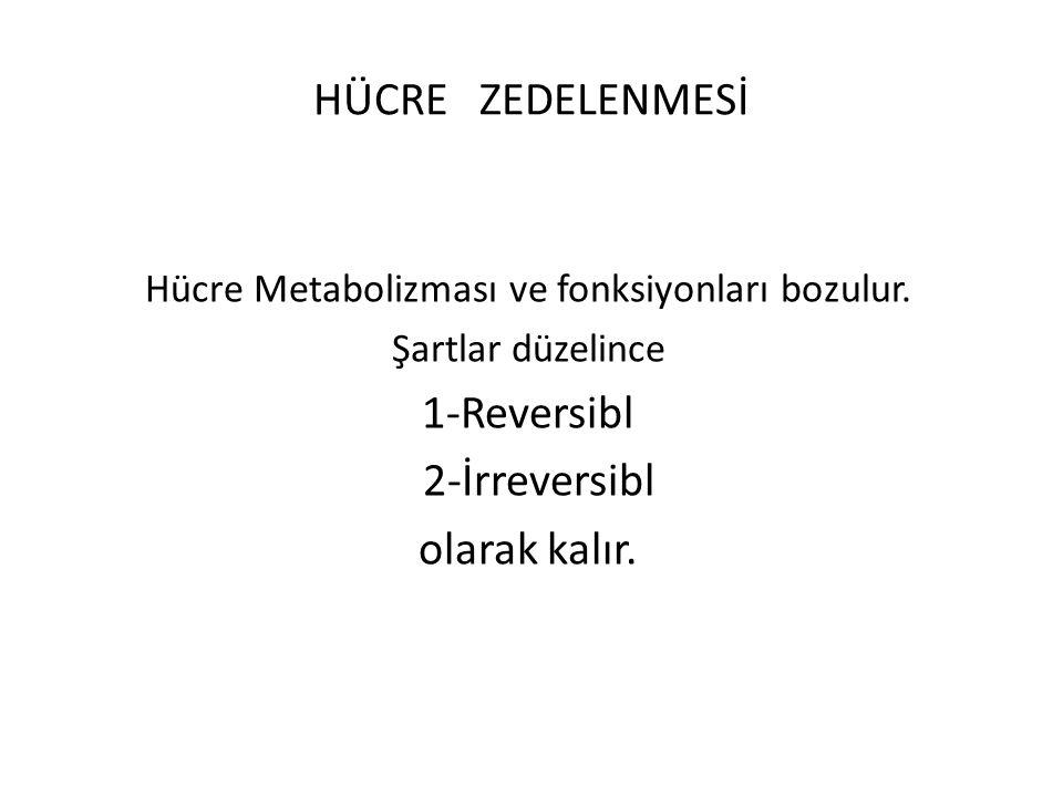 HÜCRE ZEDELENMESİ Hücre Metabolizması ve fonksiyonları bozulur. Şartlar düzelince 1-Reversibl 2-İrreversibl olarak kalır.