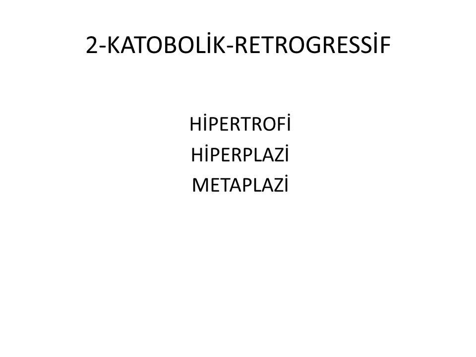 2-KATOBOLİK-RETROGRESSİF HİPERTROFİ HİPERPLAZİ METAPLAZİ