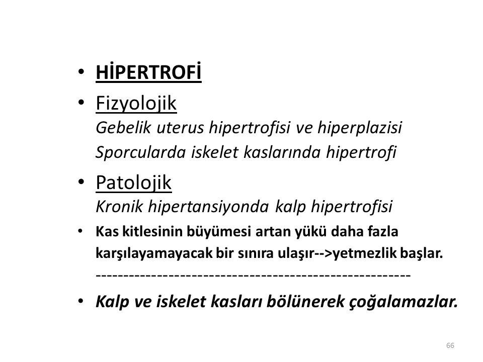 66 HİPERTROFİ Fizyolojik Gebelik uterus hipertrofisi ve hiperplazisi Sporcularda iskelet kaslarında hipertrofi Patolojik Kronik hipertansiyonda kalp h