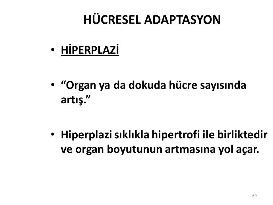"""69 HÜCRESEL ADAPTASYON HİPERPLAZİ """"Organ ya da dokuda hücre sayısında artış."""" Hiperplazi sıklıkla hipertrofi ile birliktedir ve organ boyutunun artmas"""