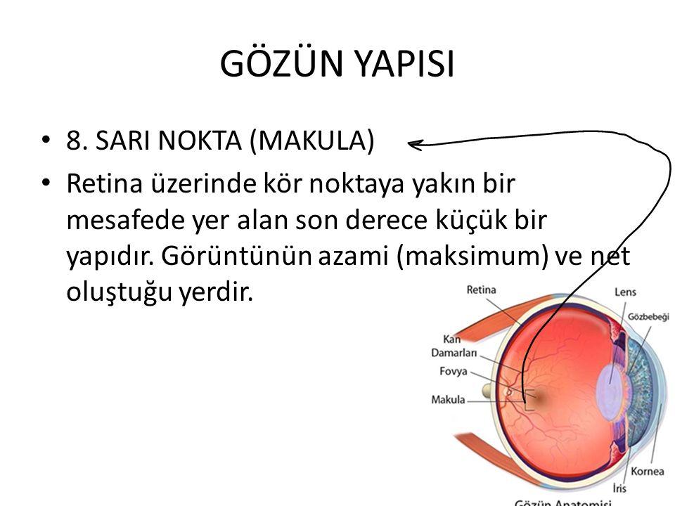 GÖZÜN YAPISI 8. SARI NOKTA (MAKULA) Retina üzerinde kör noktaya yakın bir mesafede yer alan son derece küçük bir yapıdır. Görüntünün azami (maksimum)