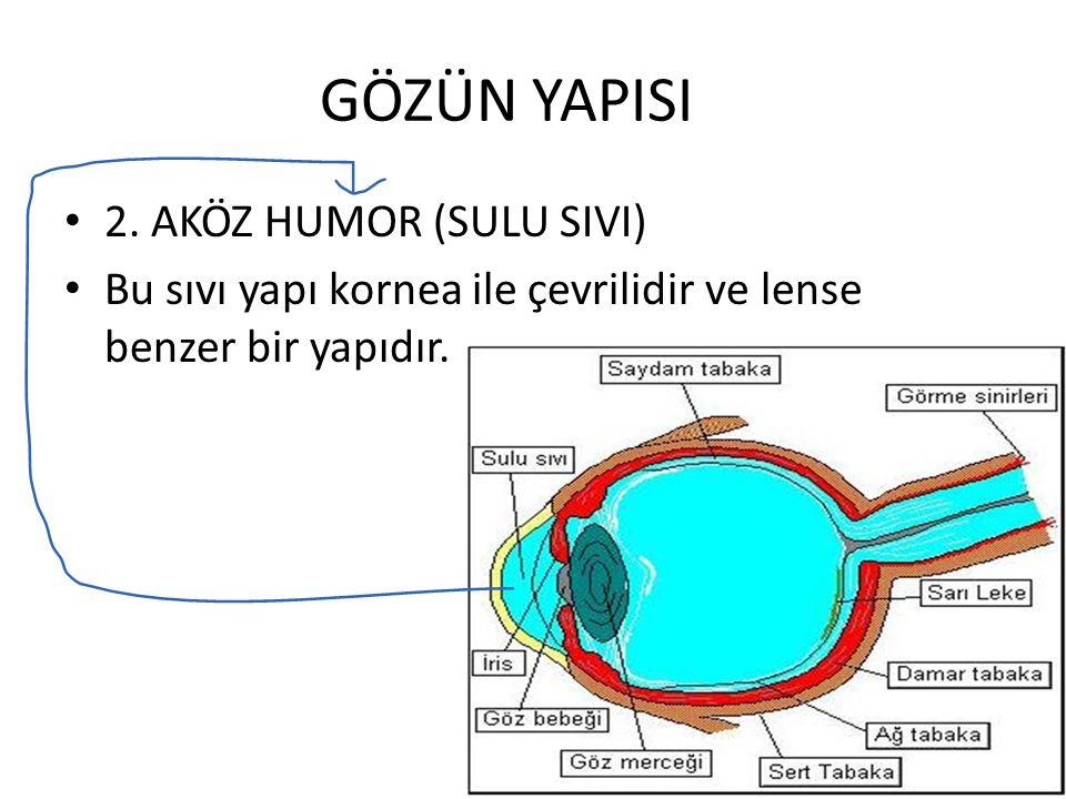 GÖZÜN YAPISI 2. AKÖZ HUMOR (SULU SIVI) Bu sıvı yapı kornea ile çevrilidir ve lense benzer bir yapıdır.
