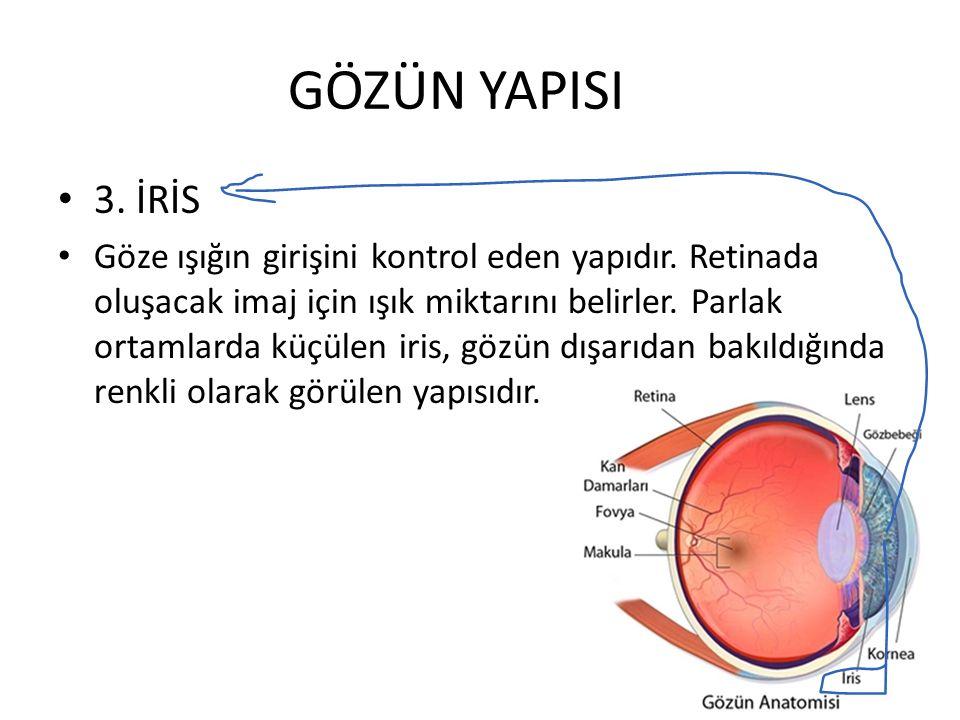 GÖZÜN YAPISI 3. İRİS Göze ışığın girişini kontrol eden yapıdır. Retinada oluşacak imaj için ışık miktarını belirler. Parlak ortamlarda küçülen iris, g
