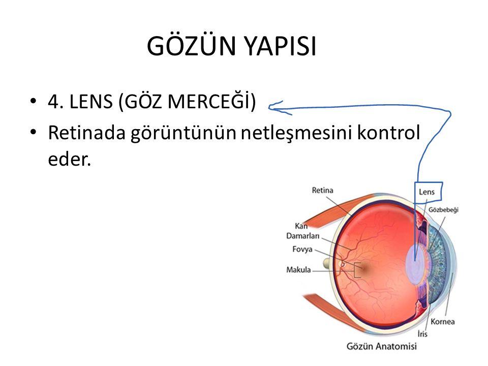 GÖZÜN YAPISI 4. LENS (GÖZ MERCEĞİ) Retinada görüntünün netleşmesini kontrol eder.