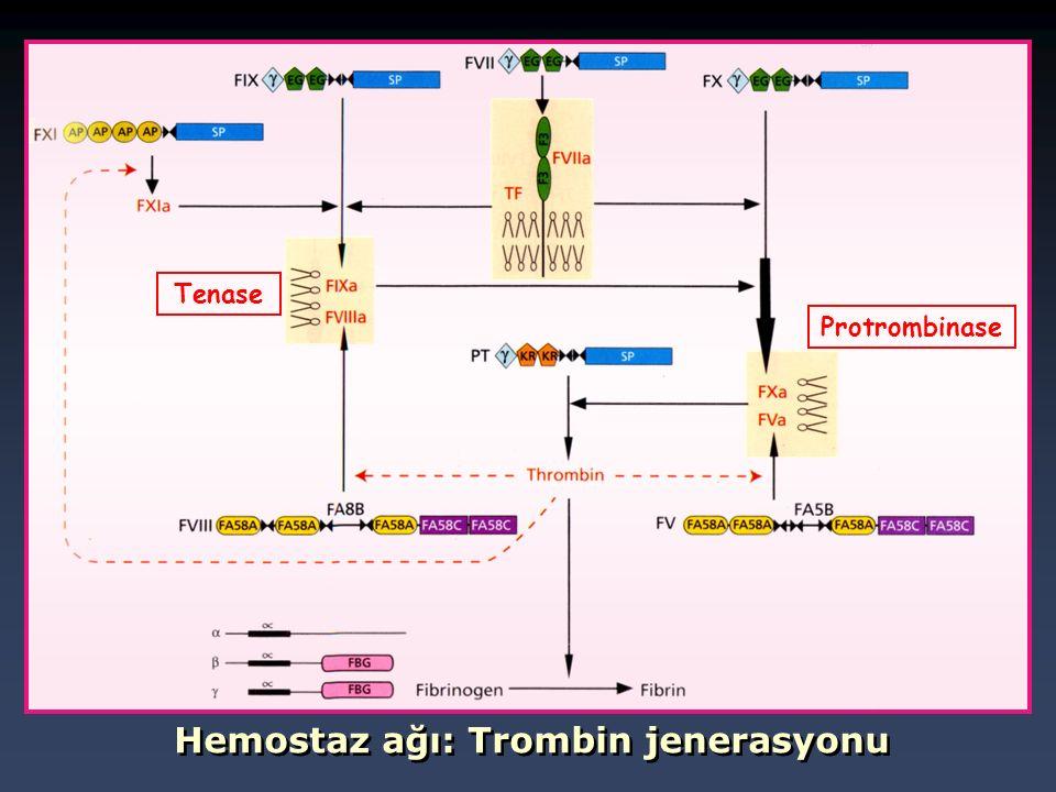 Hemostaz ağı: Trombin jenerasyonu Tenase Protrombinase