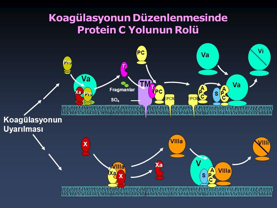 Koagülasyonun Düzenlenmesinde Protein C Yolunun Rolü Koagülasyonun Uyarılması Fragmanlar SO 4 Pro Xa Va T T PC T T TM EPCR A P C P A C V VIIIa Vi VIII