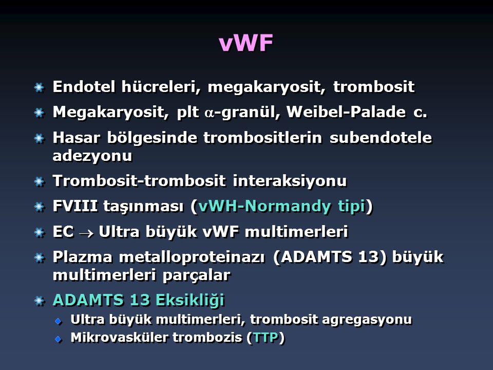 vWF Endotel hücreleri, megakaryosit, trombosit Megakaryosit, plt -granül, Weibel-Palade c. Hasar bölgesinde trombositlerin subendotele adezyonu Tromb