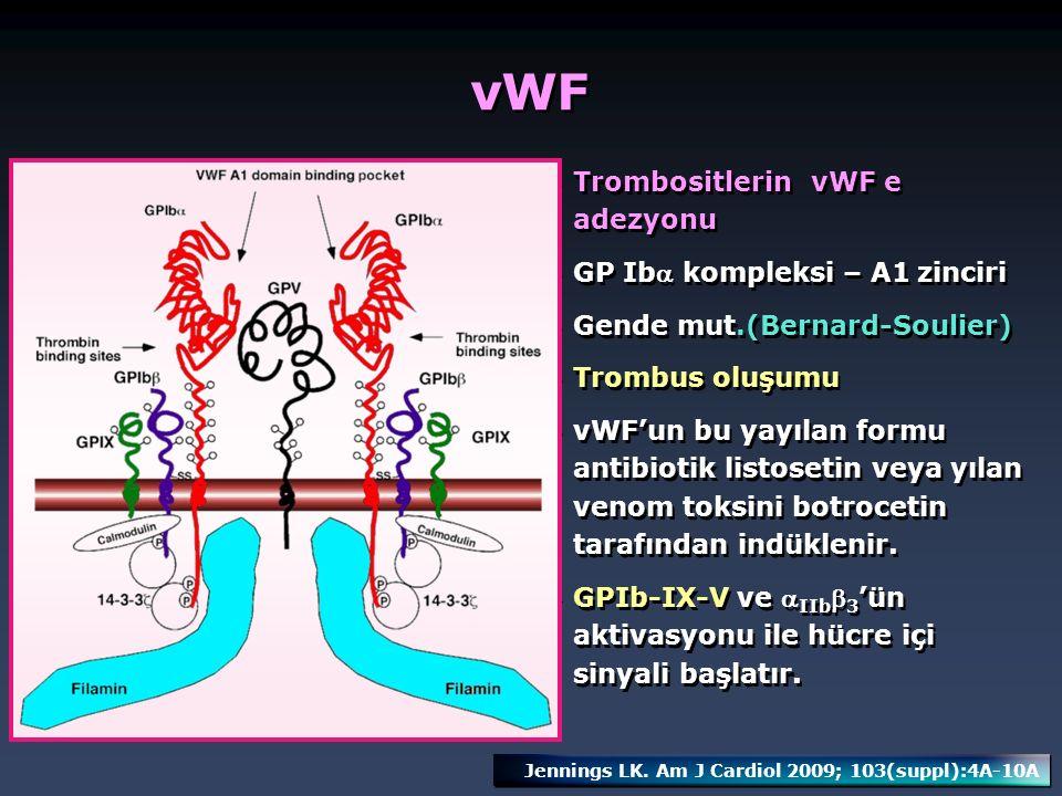 vWF Trombositlerin vWF e adezyonu GP Ib kompleksi – A1 zinciri Gende mut.(Bernard-Soulier) Trombus oluşumu vWF'un bu yayılan formu antibiotik listose