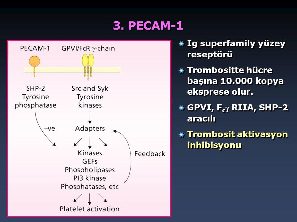 3. PECAM-1 Ig superfamily yüzey reseptörü Trombositte hücre başına 10.000 kopya eksprese olur. GPVI, F c  RIIA, SHP-2 aracılı Trombosit aktivasyon in
