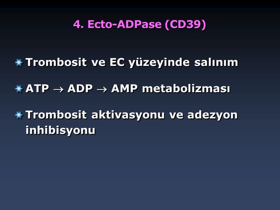 4. Ecto-ADPase (CD39) Trombosit ve EC yüzeyinde salınım ATP  ADP  AMP metabolizması Trombosit aktivasyonu ve adezyon inhibisyonu Trombosit ve EC yüz