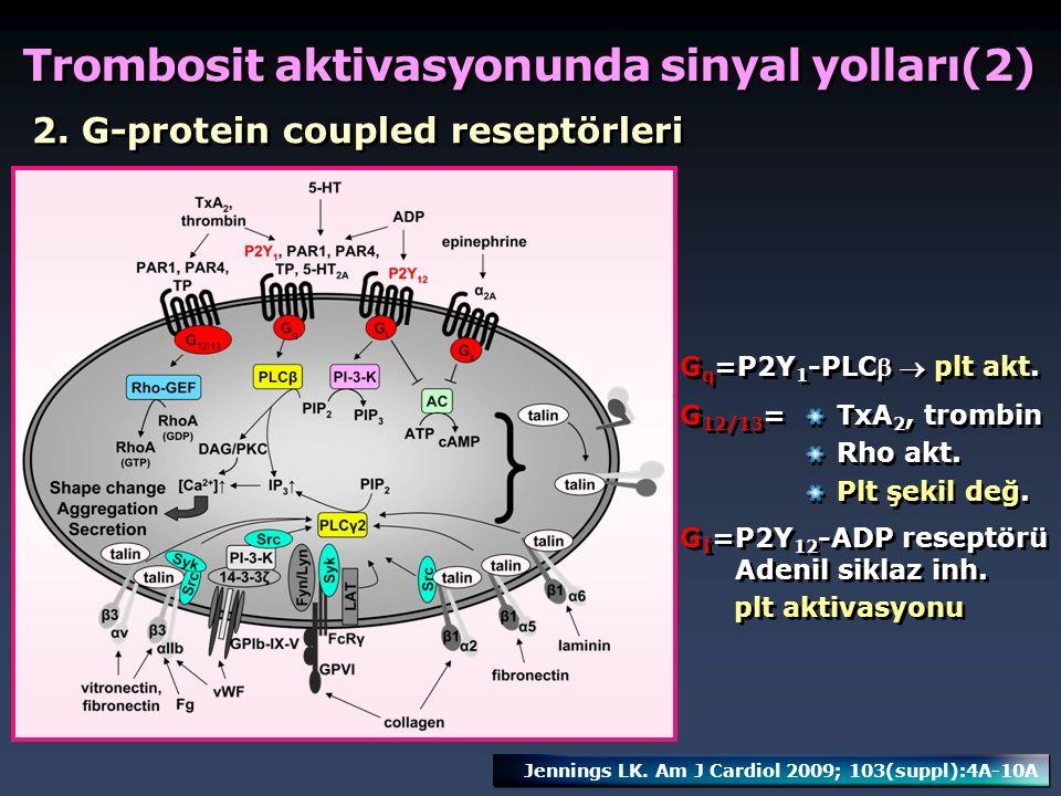 2. G-protein coupled reseptörleri G q =P2Y 1 -PLC  plt akt. G 12/13 = TxA 2, trombin Rho akt. Plt şekil değ. TxA 2, trombin Rho akt. Plt şekil değ.