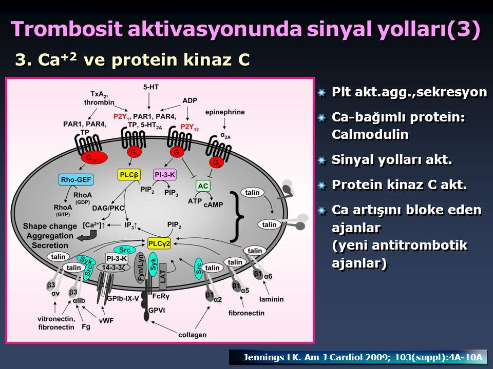 3. Ca +2 ve protein kinaz C Plt akt.agg.,sekresyon Ca-bağımlı protein: Calmodulin Sinyal yolları akt. Protein kinaz C akt. Ca artışını bloke eden ajan