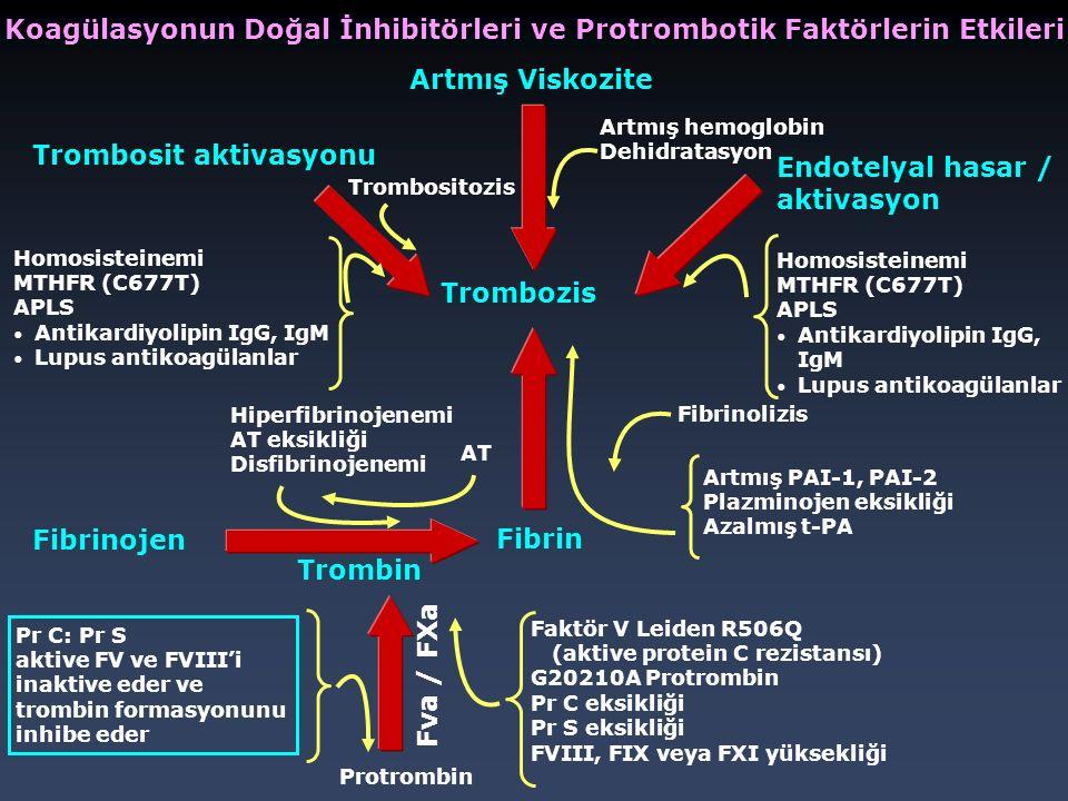 Artmış Viskozite Trombosit aktivasyonu Endotelyal hasar / aktivasyon Trombozis Fibrin Fibrinojen Trombin Fva / FXa Homosisteinemi MTHFR (C677T) APLS A