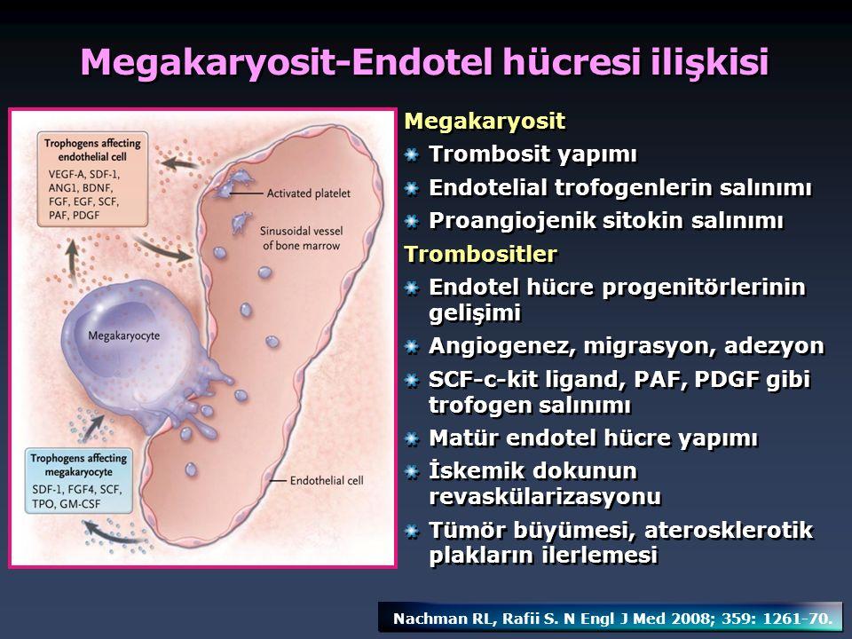 Megakaryosit Trombosit yapımı Endotelial trofogenlerin salınımı Proangiojenik sitokin salınımı Trombositler Endotel hücre progenitörlerinin gelişimi A