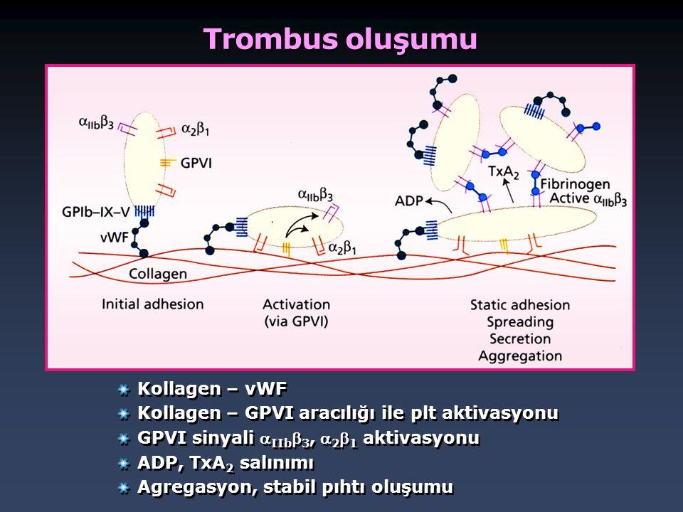 Trombus oluşumu Kollagen – vWF Kollagen – GPVI aracılığı ile plt aktivasyonu GPVI sinyali  IIb  3,  2  1 aktivasyonu ADP, TxA 2 salınımı Agregasyo