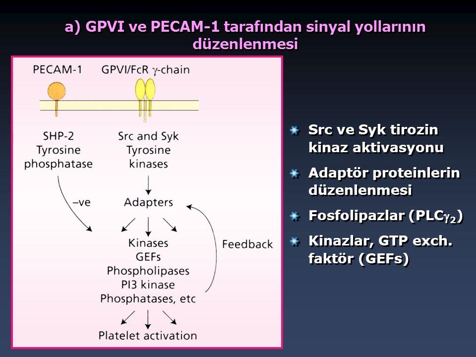 a) GPVI ve PECAM-1 tarafından sinyal yollarının düzenlenmesi Src ve Syk tirozin kinaz aktivasyonu Adaptör proteinlerin düzenlenmesi Fosfolipazlar (PLC