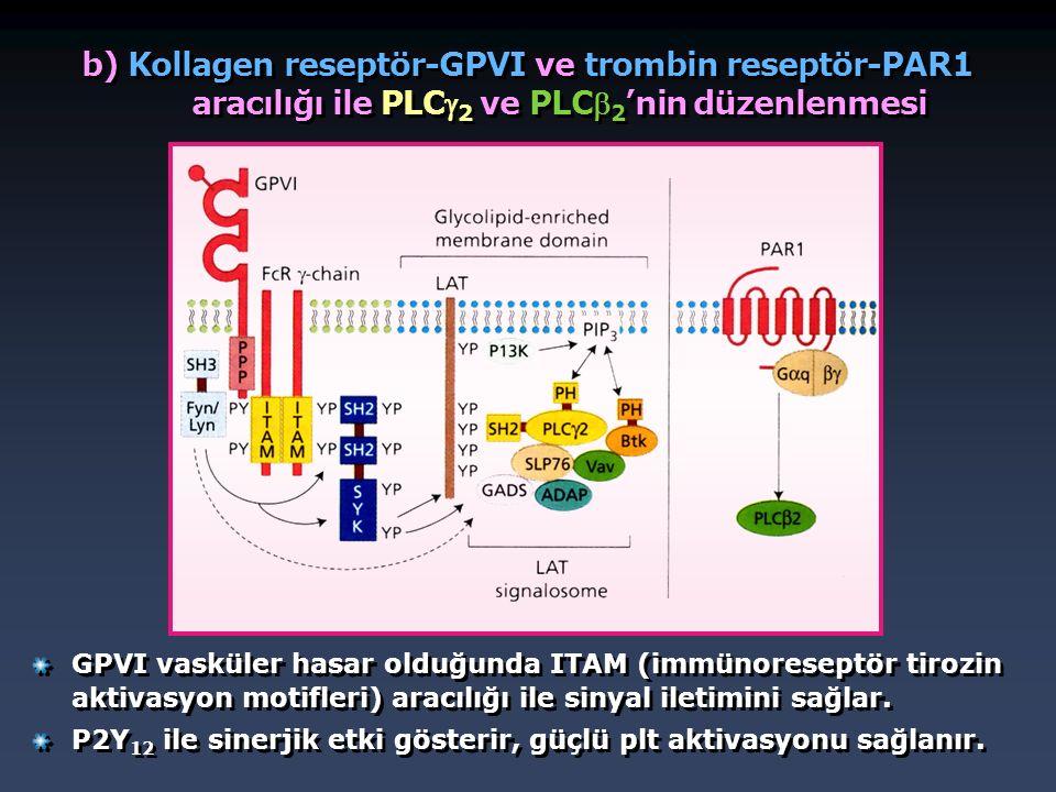 b) Kollagen reseptör-GPVI ve trombin reseptör-PAR1 aracılığı ile PLC 2 ve PLC 2 'nin düzenlenmesi GPVI vasküler hasar olduğunda ITAM (immünoreseptör