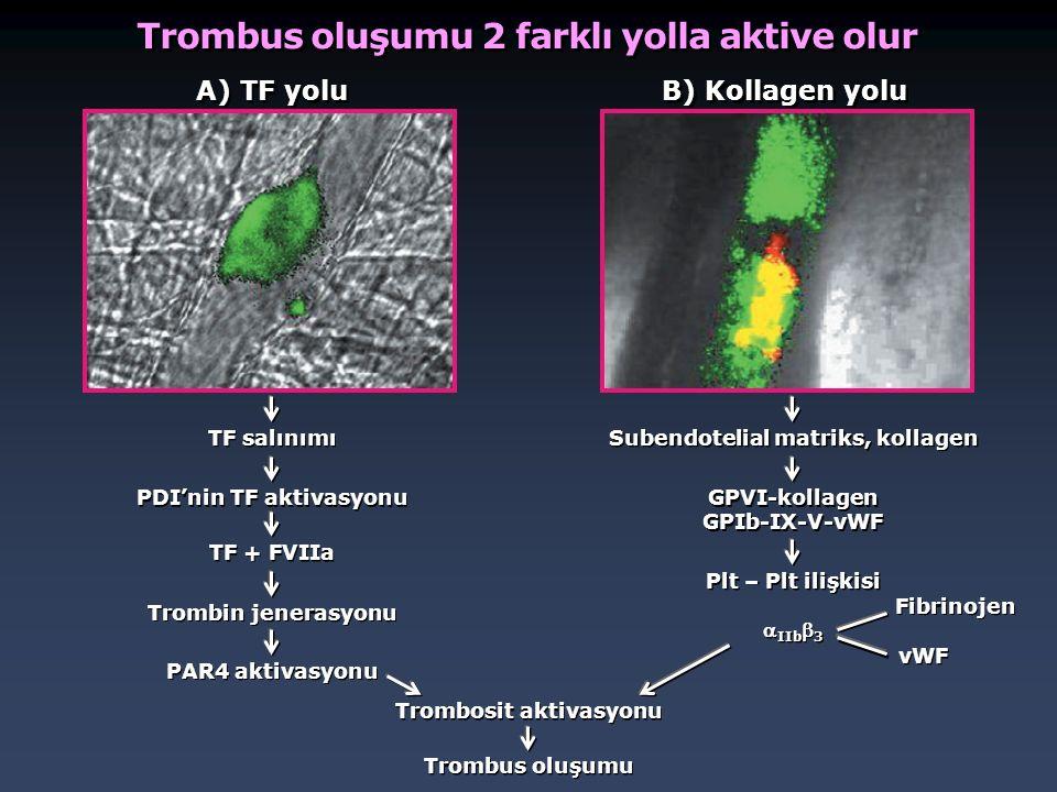Trombus oluşumu 2 farklı yolla aktive olur A) TF yolu B) Kollagen yolu TF salınımı PDI'nin TF aktivasyonu TF + FVIIa Trombin jenerasyonu PAR4 aktivasy